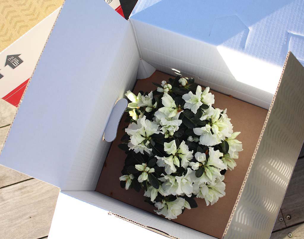 Planten en bloemen thuis laten leveren