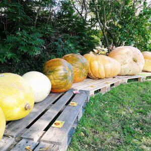 LIFESTYLE  Pompoenen geven mij meteen een herfstgevoel pumpkinhellip